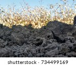 dirt pile in front of a ripe...   Shutterstock . vector #734499169