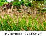 thatch | Shutterstock . vector #734533417