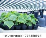 modern agricultural plant... | Shutterstock . vector #734558914