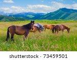 The Herd Of Horses Is Grazed On ...