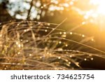 Sunset Wet Grass