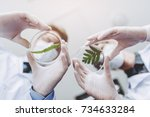 scientists in laboratory. young ... | Shutterstock . vector #734633284