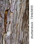 A Close Up Of A Textured Bark...