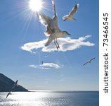 A Group Of Seagull Flying Over...