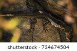 lizard | Shutterstock . vector #734674504