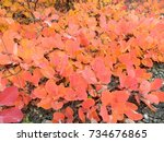 colors of autumn | Shutterstock . vector #734676865