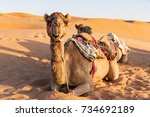 close up on camel sitting on... | Shutterstock . vector #734692189
