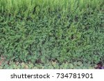 green  green fence