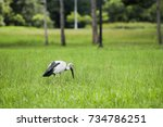 a lonely heron in the middle of ... | Shutterstock . vector #734786251