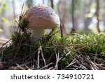 Fly Agaric With A White Stem...