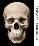 human skull model | Shutterstock . vector #73492657