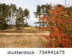 beautiful autumn background... | Shutterstock . vector #734941675