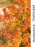 beautiful autumn background... | Shutterstock . vector #734941849