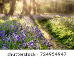 Spring Bluebell Path Through A...