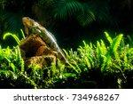 green iguana has become popular ... | Shutterstock . vector #734968267