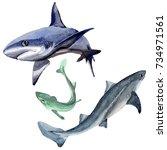 shark wild fish in a watercolor ...   Shutterstock . vector #734971561