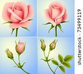 jpeg set of four rose flowers... | Shutterstock . vector #73499119