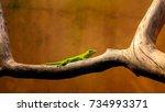the wellington green gecko ... | Shutterstock . vector #734993371