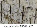 white rough withered tree... | Shutterstock . vector #735011425