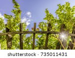 arbor roof with green lush... | Shutterstock . vector #735011431