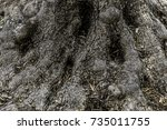 rough brown black bark tree... | Shutterstock . vector #735011755