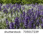 purple and white flowers mixed... | Shutterstock . vector #735017239