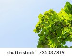 beautiful leaves for the... | Shutterstock . vector #735037819
