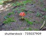 small fly agaric mushroom grows ... | Shutterstock . vector #735037909
