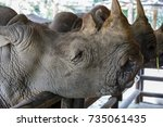 White Rhinoceros  Skin And Eyes