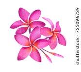 tropical pink plumeria plant.... | Shutterstock . vector #735096739