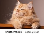 Stock photo cat happy eyes expression animal black brown 73519210