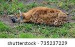 spotted hyena | Shutterstock . vector #735237229