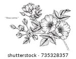 hand drawing and sketch rosa... | Shutterstock .eps vector #735328357