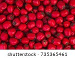 uncultivated hawthorn berries | Shutterstock . vector #735365461