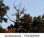 tree | Shutterstock . vector #735368989