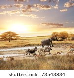 safari | Shutterstock . vector #73543834