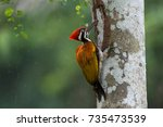 Greater Flameback Woodpecker O...
