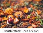 horse chestnut buckeye conker... | Shutterstock . vector #735479464