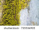 overgrown with moss fence | Shutterstock . vector #735536905