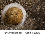 a bucket of feed for domestic... | Shutterstock . vector #735541309