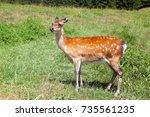 a small deer on meadow  | Shutterstock . vector #735561235