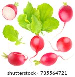 isolated radishes. collection... | Shutterstock . vector #735564721