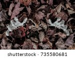 skeleton arms reaching out from ... | Shutterstock . vector #735580681