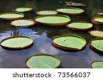 Amazon Habitat - stock photo