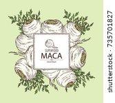 background with maca peruvian.... | Shutterstock .eps vector #735701827