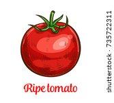 tomato vegetable sketch of... | Shutterstock .eps vector #735722311