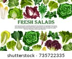 salad leaf and vegetable greens ... | Shutterstock .eps vector #735722335