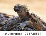 marine iguana on santiago... | Shutterstock . vector #735725584