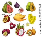 exotic fruit tropical farm... | Shutterstock .eps vector #735727741