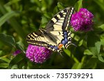Butterfly   Papilio Machaon ...